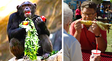 Franken+Chimp