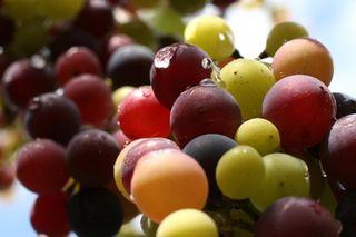 Wine-making2