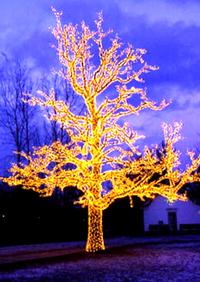 Tree_of_lights_sm